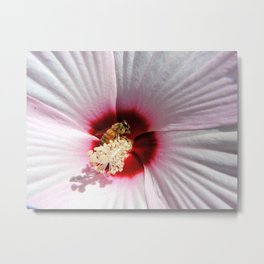 Pollination Provided Metal Print