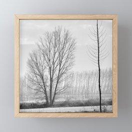 Young and old poplars. Foggy morning. Granada Spain Framed Mini Art Print