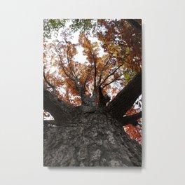 Oak Tree In Autumn Metal Print