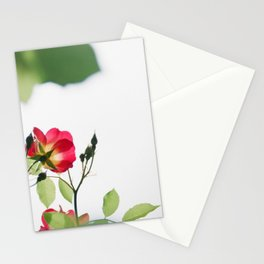 Flower Photography by MIO ITO Stationery Cards