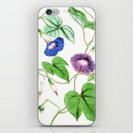 A Purging Pharbitis Vine in full blue and purple bloom - Vintage illsutration iPhone Skin