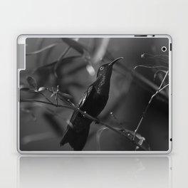 Colibri Laptop & iPad Skin