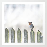 robin Art Prints featuring Robin by SUNLIGHT STUDIOS  Monika Strigel