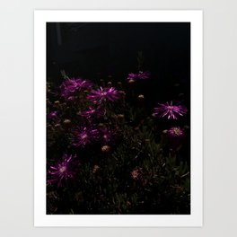 nighttime blooming Art Print