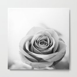 Black and White Rose Flower Photography, Grey Roses Floral Photo, Gray Neutral Nature Botanical Metal Print