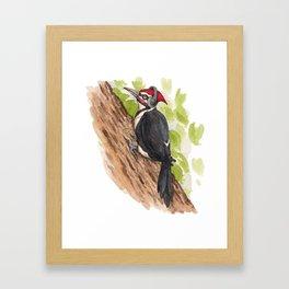 Rockin' Woodpecker Framed Art Print