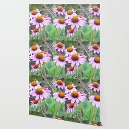 Cone flowers Wallpaper