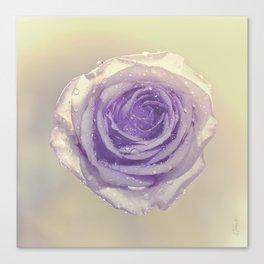 SUNLIT MAUVE ROSE Canvas Print