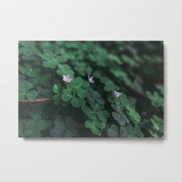 Clover Flower Metal Print