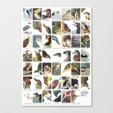 Birds of America Canvas Print