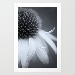 Black and White Coneflower Art Print