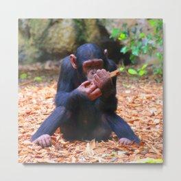 Young Chimpanzee 03 Metal Print