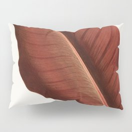 Canna - Atro Nicricans from the book Beautiful Leaved Plants by Shirley Hibberd (1870) a vintage bot Pillow Sham
