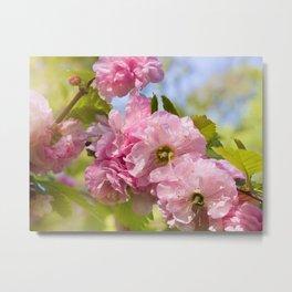 Almond blossoms pink flowering Metal Print