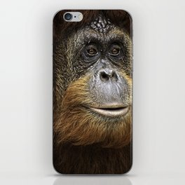 Orangutan Portrait iPhone Skin