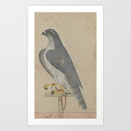 Falcon - 18th Century Classical Indian Art Art Print
