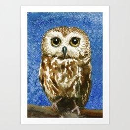 A Saw Whet Owl Art Print