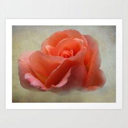 Romantic Peachy Rose Floral Art Print