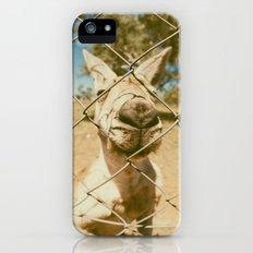 Kangaroo iPhone (5, 5s) Slim Case