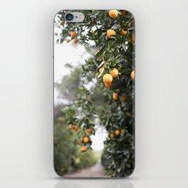 Ojai Oranges iPhone Skin