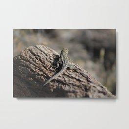 Lizard on a Log Coachella Valley Wildlife Preserve Metal Print