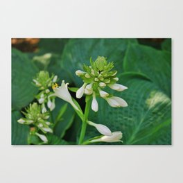 Insincere Secrets Canvas Print