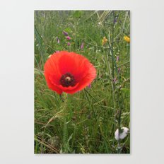 Tall Poppy Canvas Print