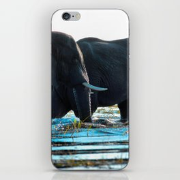 Elephants (Color) iPhone Skin