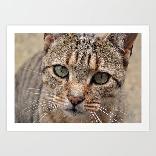 Cute kitty Art Print