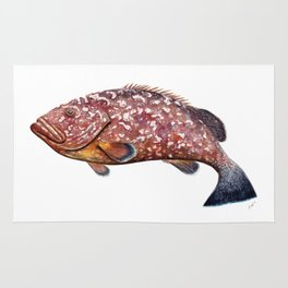 Dusky grouper or merou Rug
