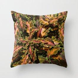 Coleus Foliage Throw Pillow