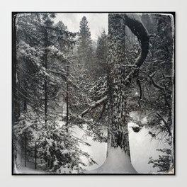 Winter white pine Canvas Print