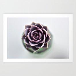 Rose Succulent Art Print