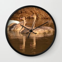Trumpeter Swan Family Wall Clock