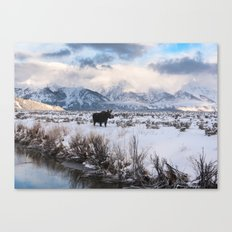 Moose in the Tetons Canvas Print