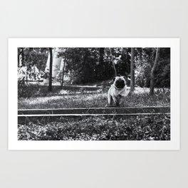 Running Pug Art Print