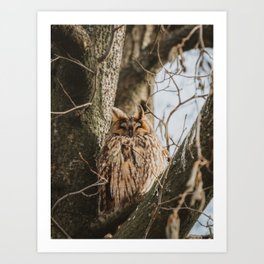 Happy Long-Eared Owl | Animal Photography Art Print