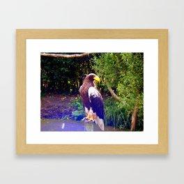 steller's sea eagle Framed Art Print
