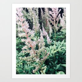 Flowers in the Garden Art Print