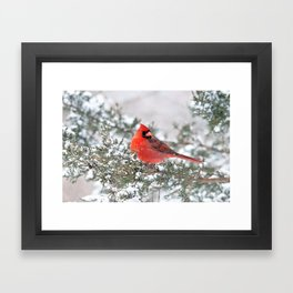 Winter's Beauty Cardinal Framed Art Print