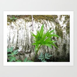 Birch with Greenery Art Print