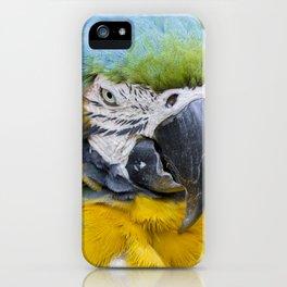 Macaw - Bird Photography iPhone Case