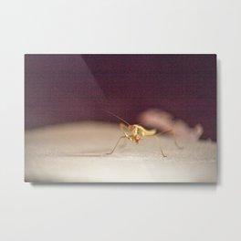 Gritty Mantis Metal Print