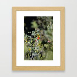 I'iwi Framed Art Print