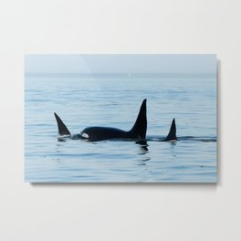 T10s Killer Whales Family Metal Print