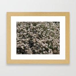 """""""Helichrysum Stellatum"""" by ICA PAVON Framed Art Print"""