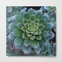 Shades of Succulent Green Metal Print