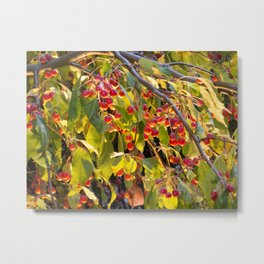 Bright red berries on a tree Metal Print