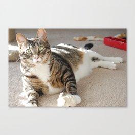 Flour Cat Canvas Print