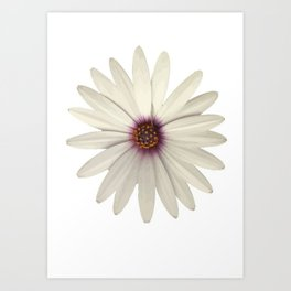 Symmetrical African Daisy with White Petals Art Print